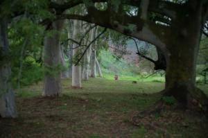 L1000364WalkThroughTheTrees
